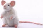 Мягкая игрушка  Hansa Creation  5323 Белая мышь, 16 см